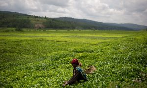 After Genocide: Democracy in Rwanda, 20 Years On