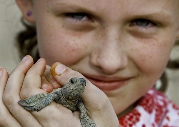 Baby Olive Ridley turtle  (Paul J. Richards/AFP/Getty Images)