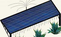 Grow Agave for Biofuel Among Solar Panels