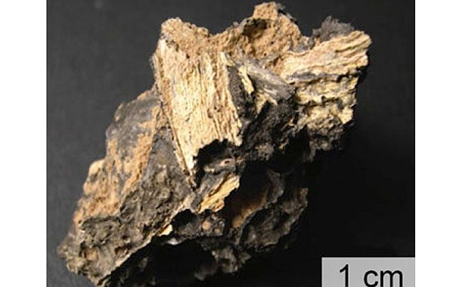 The scorching heat produced by asteroid or comet impacts can melt tons of soil and rock, some of which forms glass as it cools. Some of that glass preserves bits of ancient plant material. (Brown University)