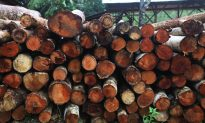 Indonesian 'Legal' Timber Scheme Could Be Greenwashing Illegal Products, NGOs Warn