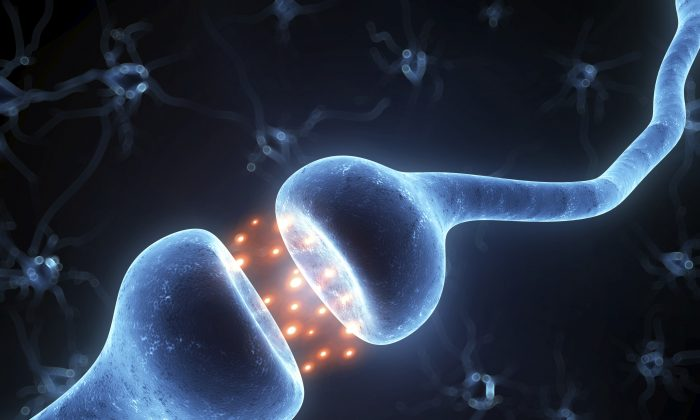 Researchers have identified a group of neurons in the basal forebrain that help synchronize activity in the cortex, triggering brain waves that are characteristic of consciousness, perception, and attention. (Eraxion/thinkstockphotos.com)