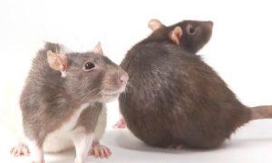 Do Animals Have a Sense of Humor?