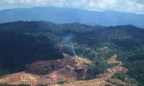 Malaysian Palm Oil Giant Tied to Social Conflict, Deforestation, Says Report