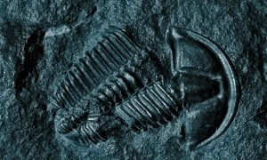 The Greatest Mass Extinction Ever May Have Been Kicked Off by Microbes