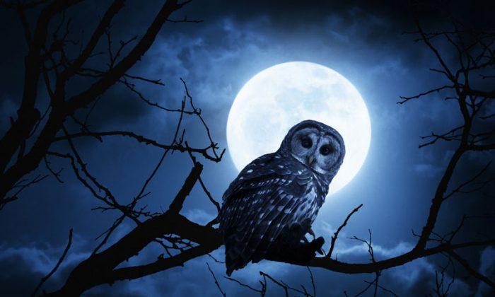 More men than women consider themselves night owls, and men sleep less overall. (Shutterstock*)