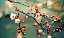 Springtime is Liver Time in Chinese Medicine