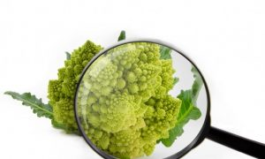 Why Broccoli is Crucial in Helping Our Immune System