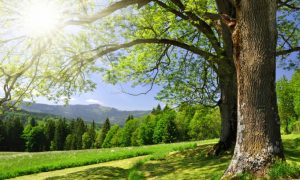 Adaptation, Spring, and the Wood Element in Chinese Medicine