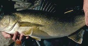 Mercury Rising in Some Ontario lakes