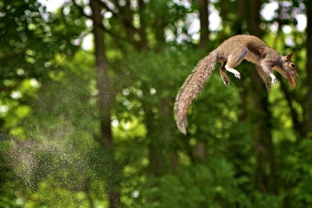 Squirrel jump (Max Ellis)