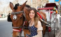 High Schooler Tackles Horse Carriage Issue With Maturity