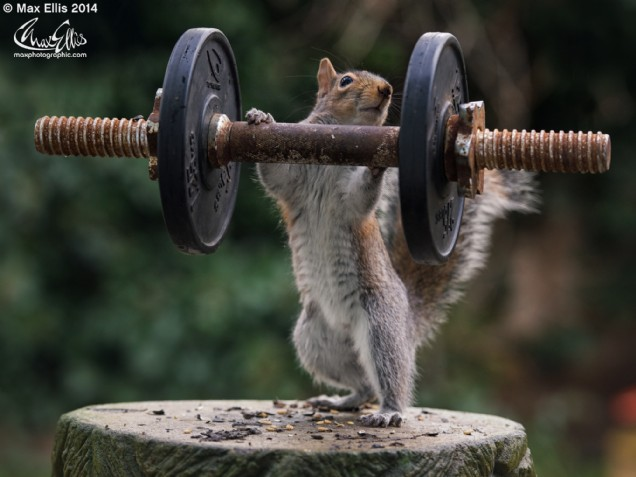 Free weights (Max Ellis)