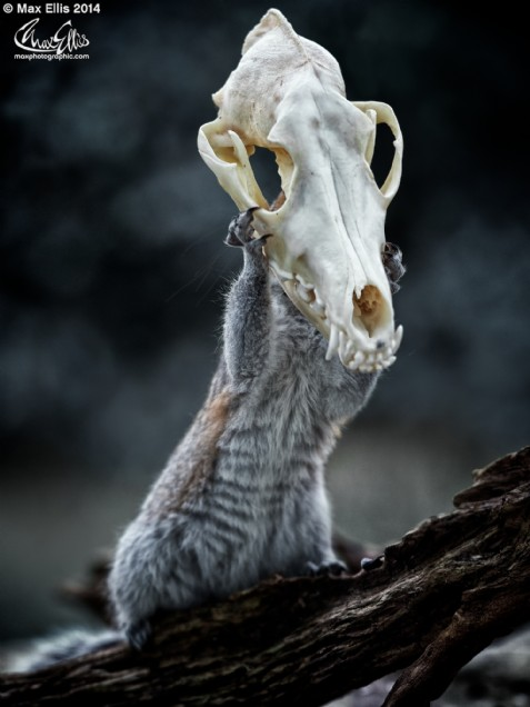 One Squirrel of the apocalypse (Max Ellis)