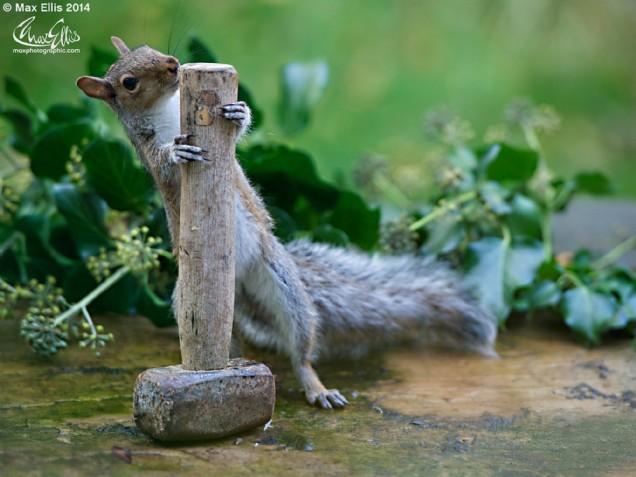 Mighty Squirrel Thor (Max Ellis)