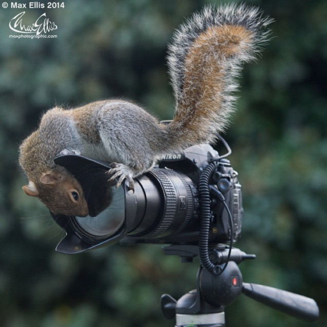 Wildlife photographer of the year (Max Ellis)