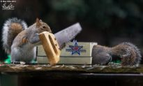 Squirrels Doing Stuff: It's Cute and Funny (Photo Gallery)