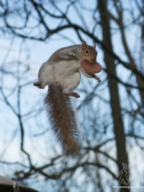 Super Squirrel (Max Ellis)