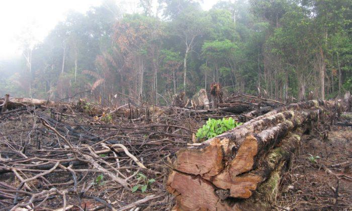 A cut block in the Amazon in Brazil. (Shutterstock*)