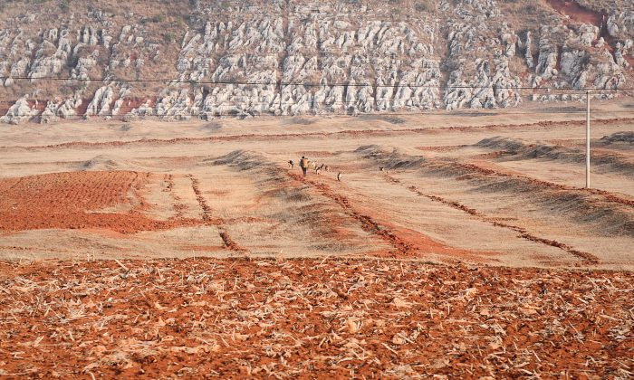 A Chinese farmer grazes his livestock on his dried-up field after an extended drought in Fuyuan, Yunnan Province, in 2012. Facing a food crisis, China relinquished its policy for grain self-sufficiency. (STR/AFP/Getty Images)