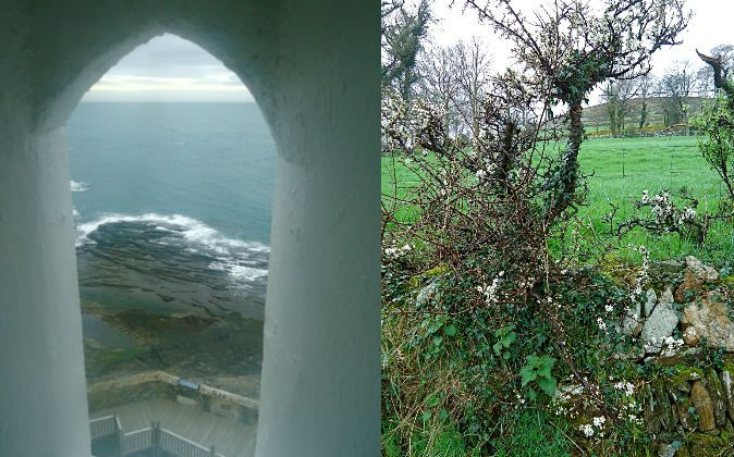 The ocean and the blackthorn fairy trees along the southeast coast of Ireland. (Susan James)