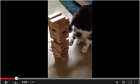 Is This the Awesomest Cat in the World? The Internet Says Yes! (Video)