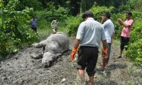 Poacher Kills Another Rhino in Wildlife Sanctuary