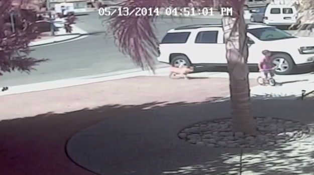 Screen shot of the footage of the incident where four-year-old Jeremy Triantafilo gets attacked by a dog outside his home in Bakersfield, California, on May 13, 2014. (Youtube)
