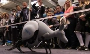 Watch a Robot Kangaroo in Action: Leap Forward in Technology