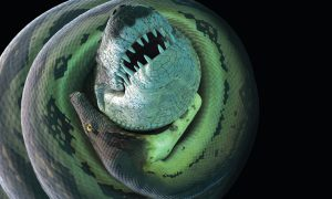 When a 900-Pound Croc Takes on a 58-Foot Snake