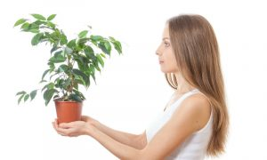Your Houseplants Can Think, Talk, Read Your Mind (Part 2)