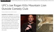 Is It Too Late to Save Mountain Lions in Southern California?