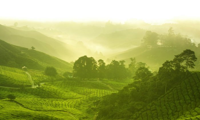 A file photo of Malaysian highlands. The way the Senoi people of the Malaysian highlands view dreams has been of great interest to many dreamers worldwide for decades. (Shutterstock*)