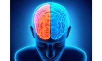 How Left-Right Brain Handoffs Happen Without a Hitch