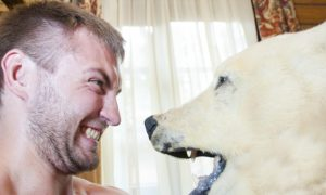 Polar Bear Leaves the Ice. How to Deal With Them Inuit Style
