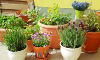 Get a Head Start on Spring with These Garden Prep Tips (Infographic)