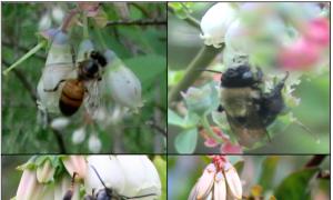 High Bee Biodiversity Boosts Crop Yields