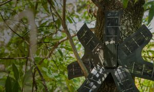 Old Cellphones Become Poaching Detector in Real Time
