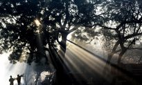 Toll-Free Hotline Protects Trees in New Delhi