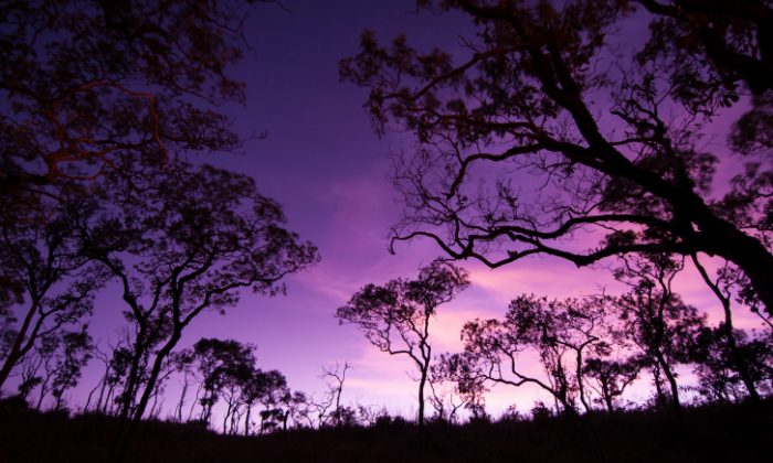 A forest in Tanzania, Africa. (Thinkstock)