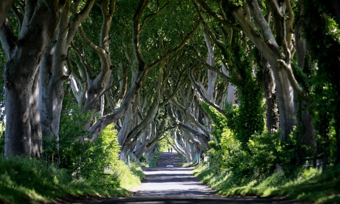 JJ Murphy, a Northern Irish actor, died four days after filming the first scenes in Game of Thrones. He was to play Ser Denys Mallister in the upcoming season. In this picture taken June 16, 2014, the scenic avenue of beech trees at Dark Hedges situated 50  miles North from Belfast in County Antrim, Northern Ireland.  The avenue featured in season 2 of the Game of Thrones as Ayra Stark makes her escape from Kings landing.  (AP Photo/Peter Morrison)