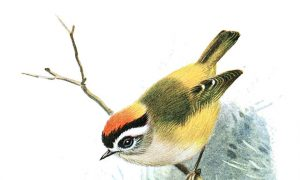World's Highest Number of Song Birds in India