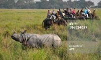 Despite Poaching, Assam Rhino Numbers Are Rising