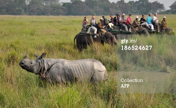 ourists photograph a rhinoceros during an elephant safari at Kaziranga National Park, some 250kms east of Guwahati on November 1, 2013.(Photo credit should read STRDEL/AFP/Getty Images)