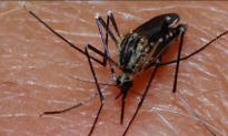 New Mosquito-Carried Virus Confirmed In U.S. (Video)
