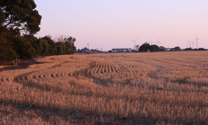 The wheat landscape of South Australia has a natural colour pallet of earthy umber. (Reine Hobbs)