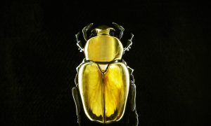 Butterflies, Beetles and the Fashion Jewellery Renaissance