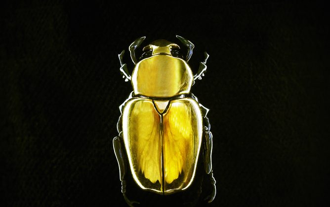 22ct Gold Jewel Beetle Brooch by Shaun Leane. (Nick Knight's SHOWstudio)
