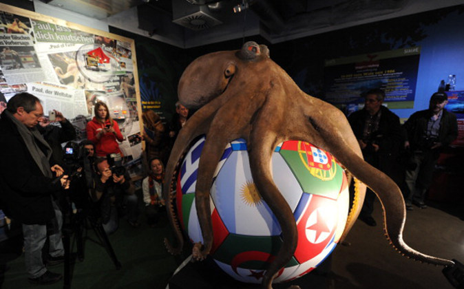 The memorial of Paul the octopus is presented on January 20, 2011at the Sea Life Aquarium in Oberhausen, western Germany. The tentacled tipster was honoured with a 'Paul Corner' at his former home 3 months after his death, containing his ashes and a 'huge memorial'. Paul the octopus, who shot to fame during the 2010 football World Cup in South Africa for his flawless record in predicting game outcomes, died in October 2010. AFP PHOTO / PATRIK STOLLARZ (Photo credit should read PATRIK STOLLARZ/AFP/Getty Images)