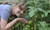 School Gardens Sprout Fit Kids